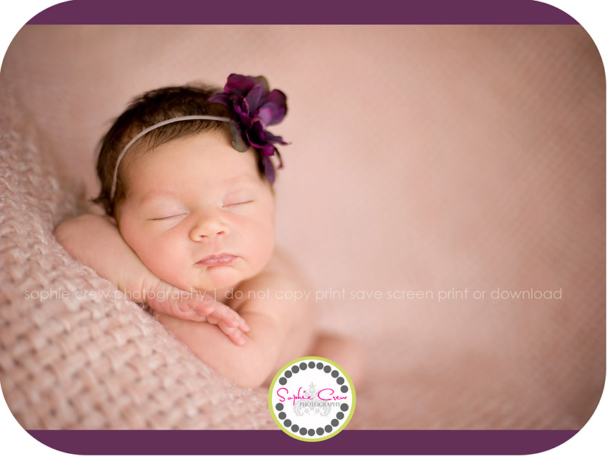 San Diego North Park Kensington Downtown Hillcrest Newborn Photographer
