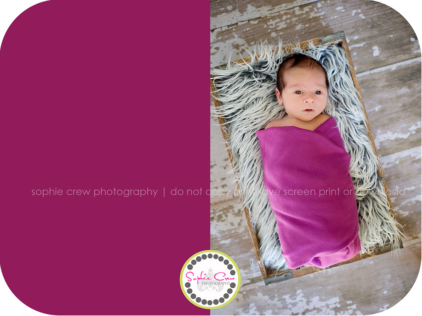 San Marcos Newborn Photographer, San Marcos Baby Photographer, San Diego North County Newborn Photographer