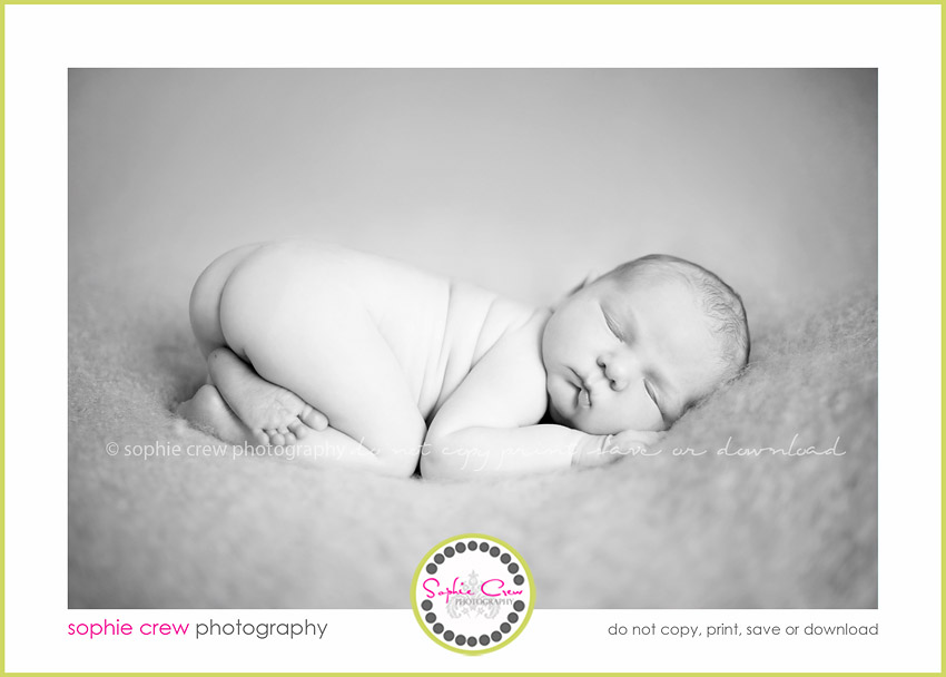 newborn photographers san diego