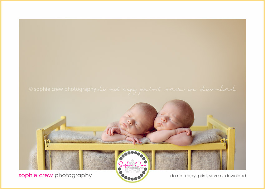 san diego twin newborn photogrpaher