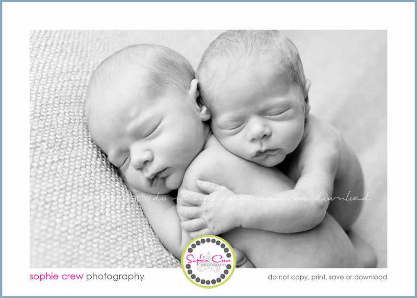san diego newborn twin photogrpaher