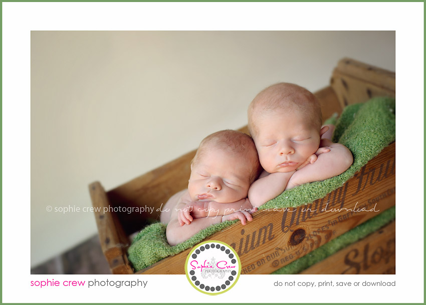 san diego newborn photographer twins triplets multiples