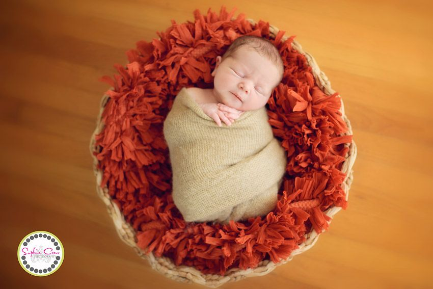 san diego newborn photography for baby in basket sophie crew la jolla artistic photography newborn travel to home belly to baby