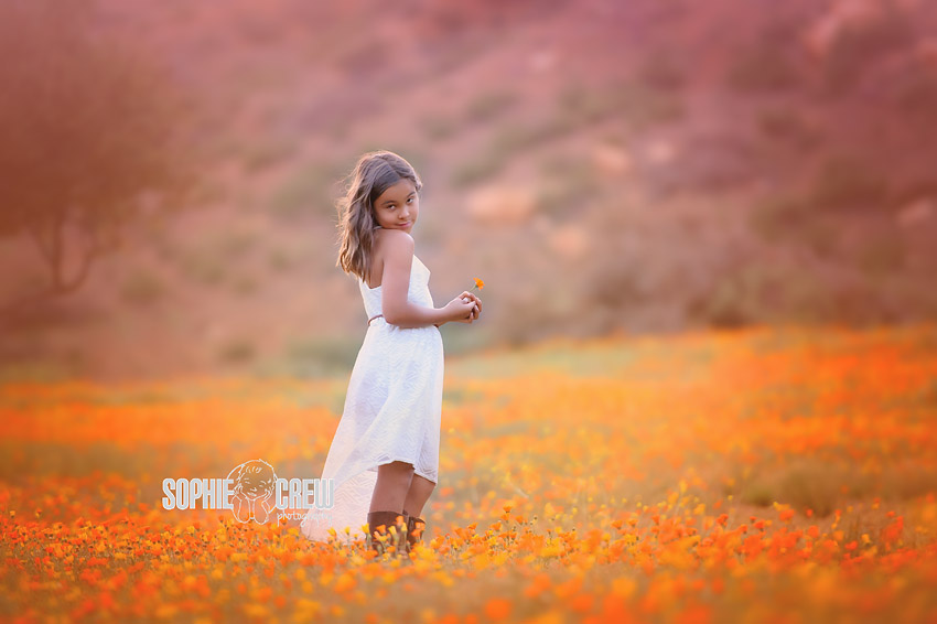 flower field sunset. Photography Session In Flower Bloom Field Orange Sunset