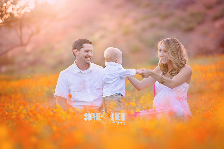 Beautiful maternity session in a field of orange flowers ...