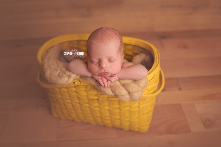 2 week old newborn baby posed in basket
