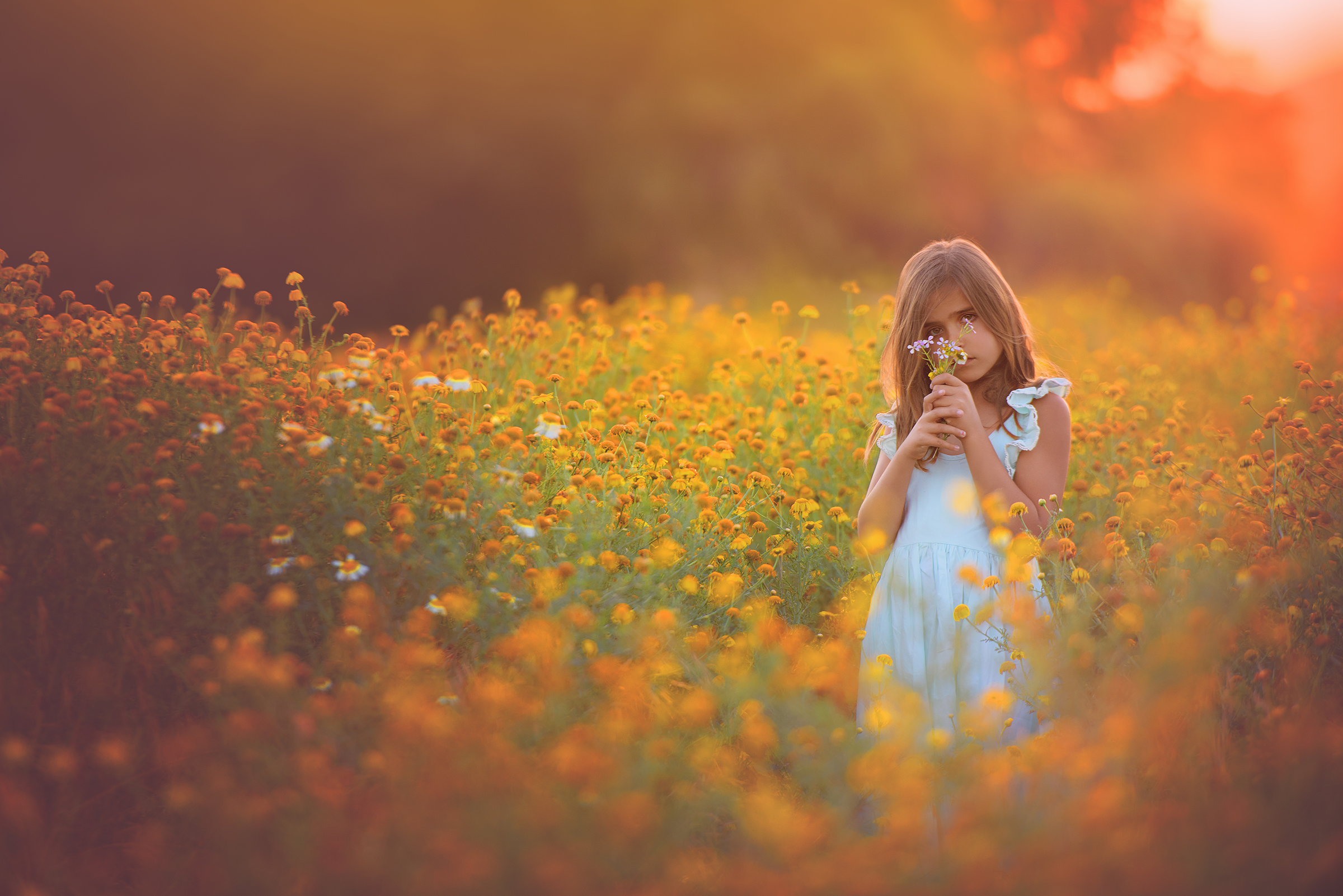 Yellow and orange flower field in wildflower location for spring portrait photos