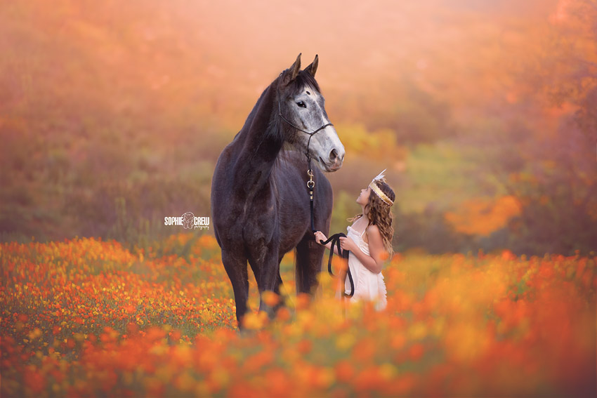 Little girl and black horse in San Diego in orange and yellow wildflowers for photography shoot with Sophie Crew