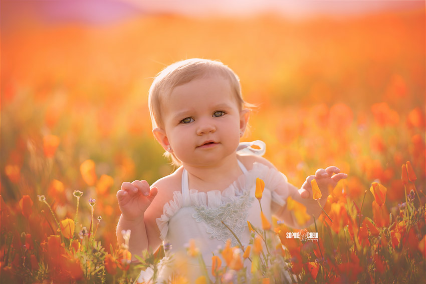 San Diego baby poses in poppies and wildflowers in San Diego