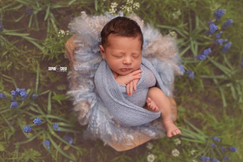 Newborn boy posed in bluebonnet San Diego