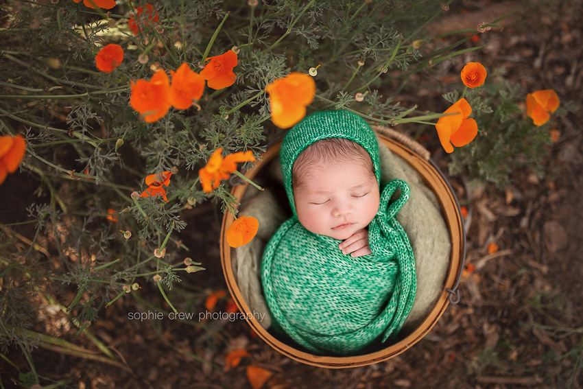 newborn photos of babes in outdoors poppies and nature