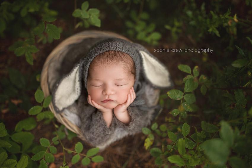 newborn dressed as a little lamb for newborn photos